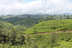 The rolling tea hills of Munnar